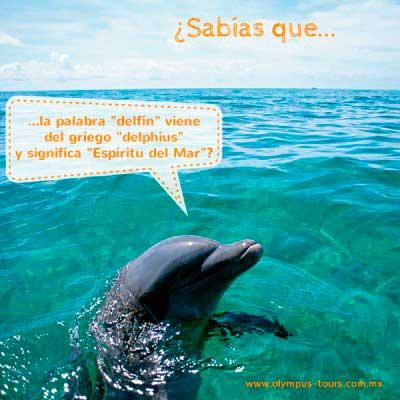 tierra de delfines mi nombre es delfín 05 400x400