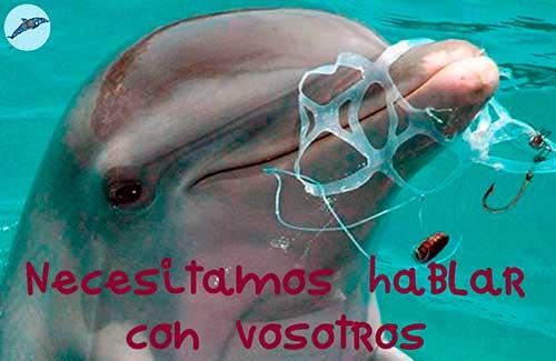 tierra de delfines nosotros necesitamos hablar con vosotros 500x325