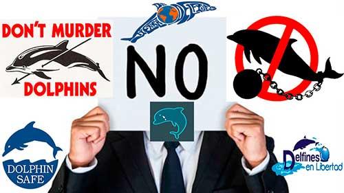 tierra de delfines nosotros no matanzas no cautiverio 500x281
