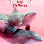 guarderia los delfines 01 texto