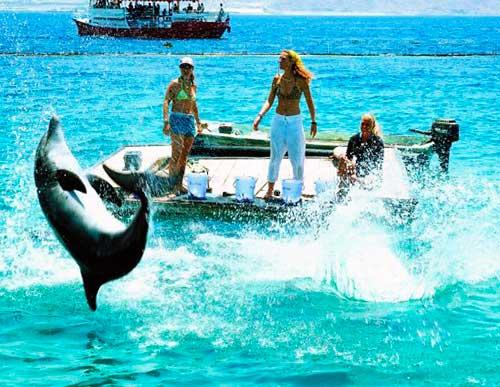 guarderia los delfines 03 texto
