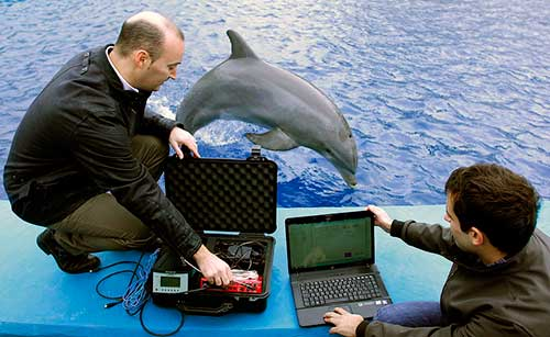 algorimo reconoce voz delfines 05 texto