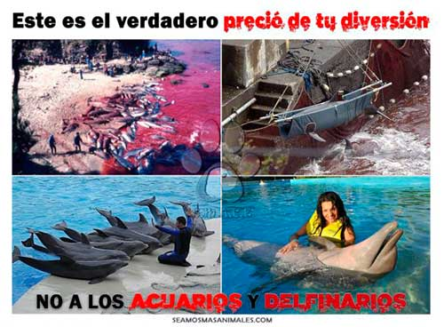 cautiverio de cetaceos en españa 04 texto