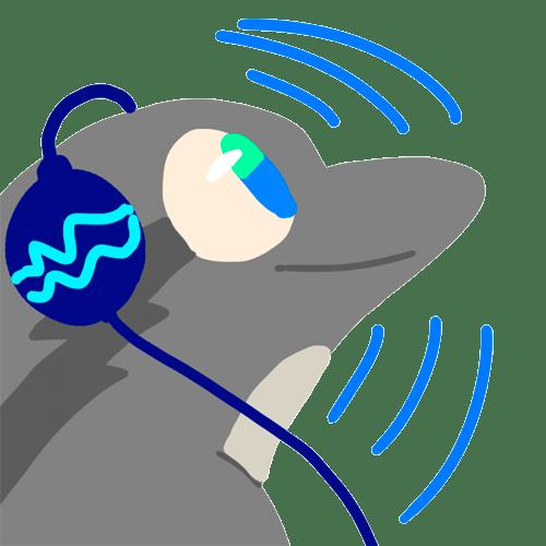 delfin musica utero 02 texto