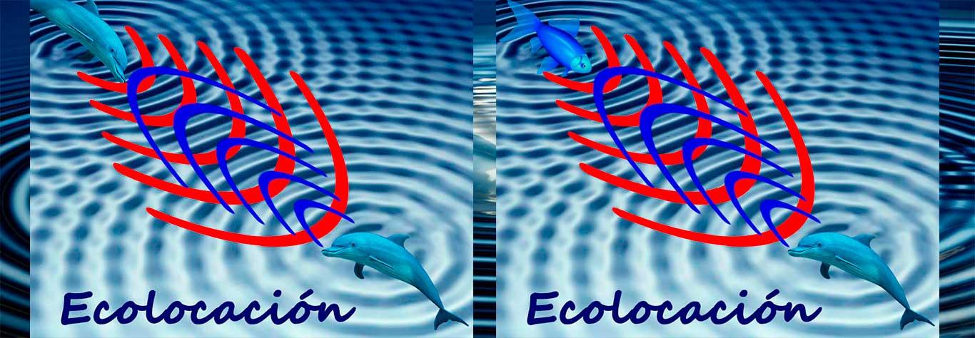 ecolocalización 03