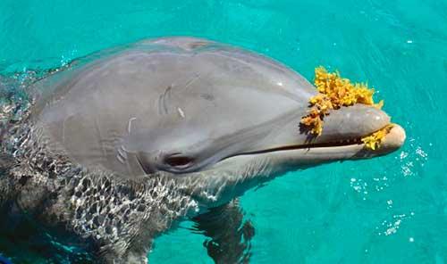 el futuro de seis delfines 08 texto