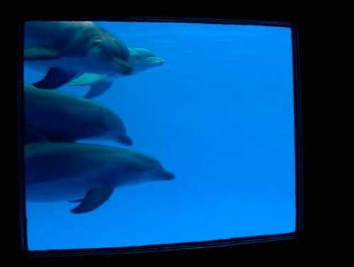 el futuro de seis delfines 12 texto
