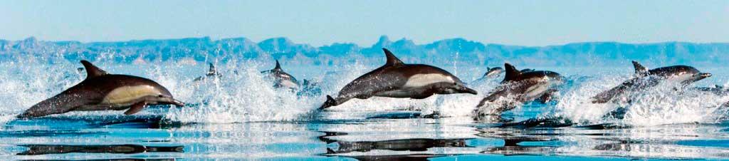 españa debe prohibir los delfinarios 11 texto