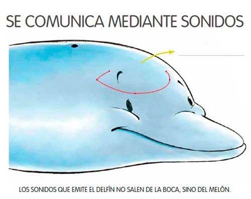 sonidos de delfines 03 texto
