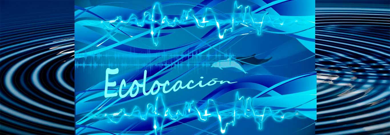 ecolocalización 10