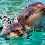 delfin_mular_texto_04