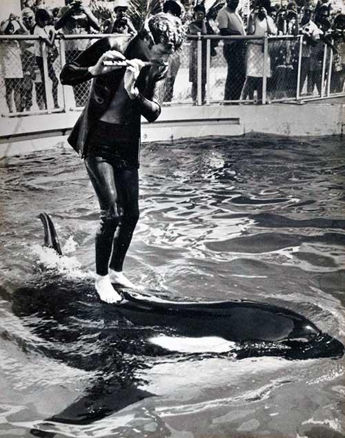 flautista orca