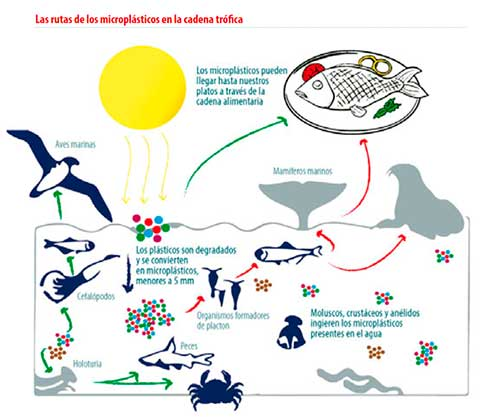 microplasticos cadena trofica