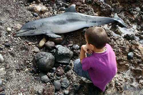 niño y delfin muerto
