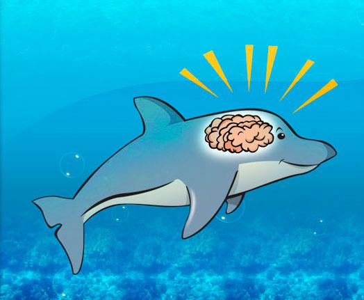 dolphin smart brain