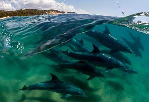 delfines establecen horarios 04
