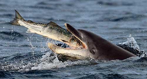 delfines establecen horarios 06