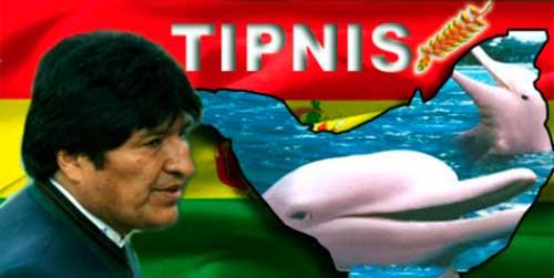 Inia boliviensis 05
