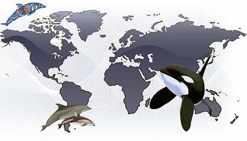 tierra de delfines inicio 02
