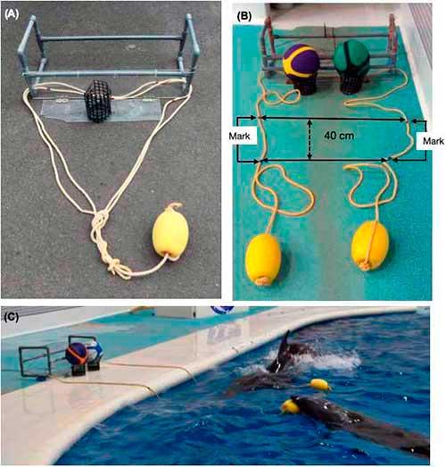 cooperacion delfines 01
