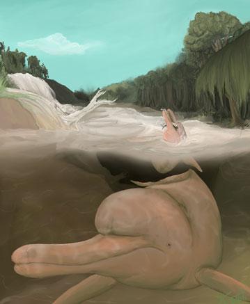 Tierra-de-delfines-Inia-geoffrensis--200