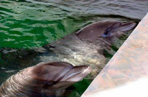 conversacion entre delfines 01 texto