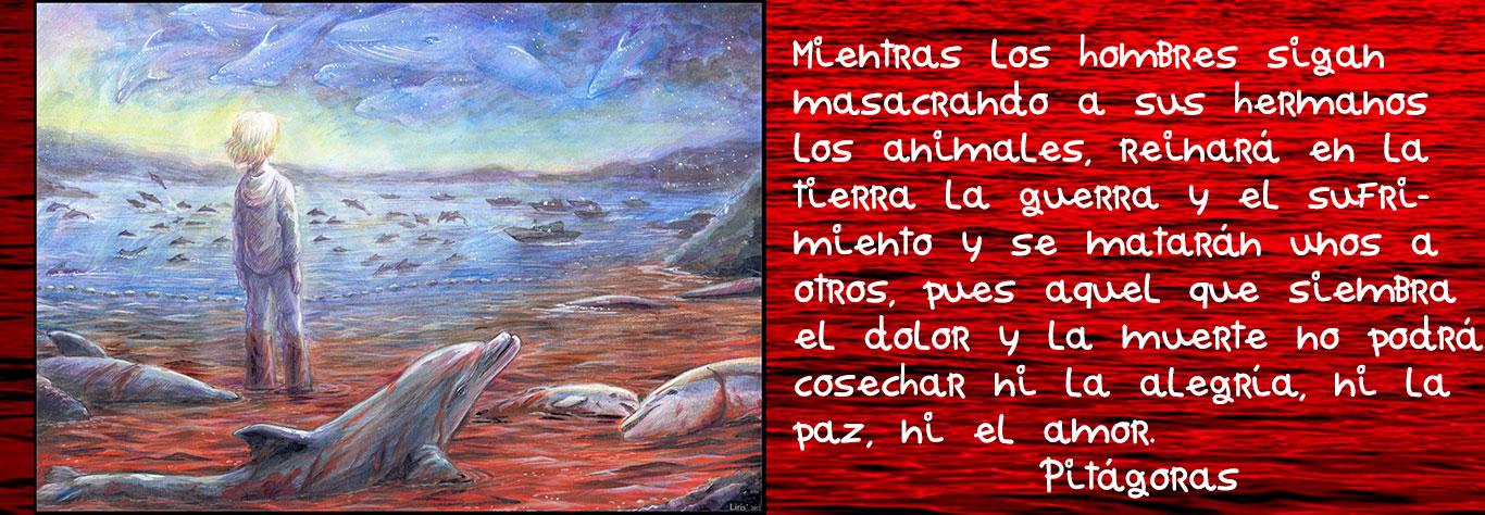 delfines sangrando y niño con frase de Pitagoras