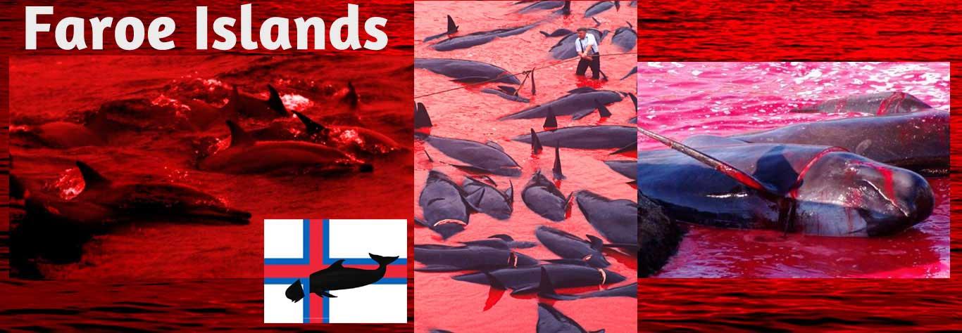 Islas Feroe 04