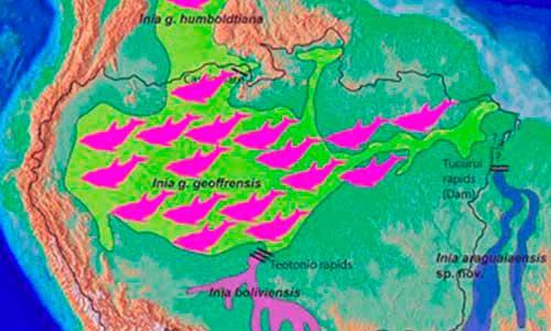 Mapa distribución Delfín rosa del Amazonas, Inia geoffrensis