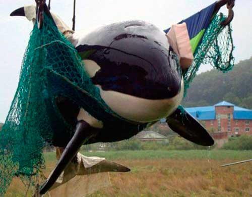 cautiverio de cetaceos en españa 06 texto