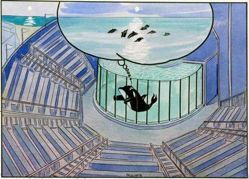 cautiverio de cetaceos en españa 07 texto