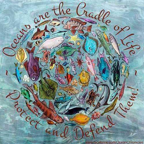 contaminacion oceanos 04 texto