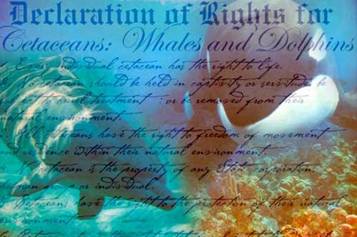declaracion derechos 01 texto