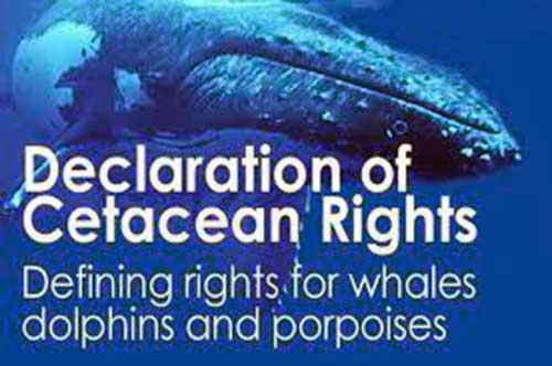 declaracion derechos 02 texto