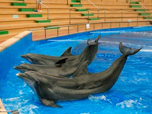 el futuro de seis delfines 02 texto