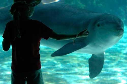el futuro de seis delfines 05 texto