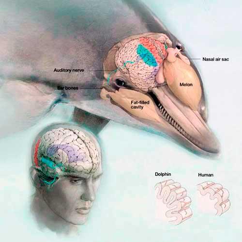 el futuro de seis delfines 13 texto