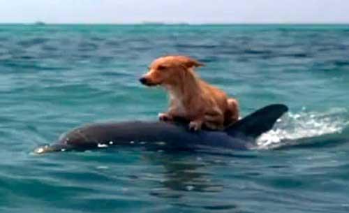 inteligencia delfines perros 03 texto