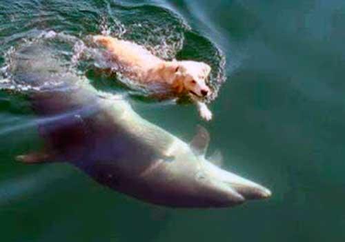 inteligencia delfines perros 06 texto
