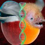 similitud adn murcielagos y delfines 01 texto