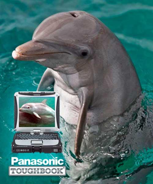 sonidos de delfines 01 texto