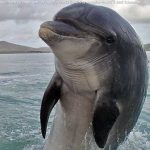 delfin_mular_texto_05