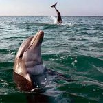 delfin_mular_texto_06b