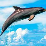 delfin_mular_texto_08