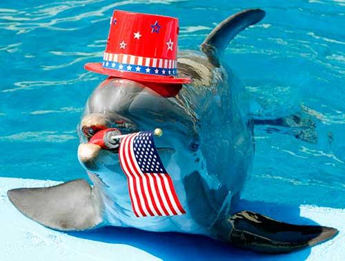 delfin payaso 01