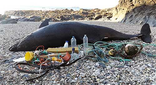 delfin muerto y plasticos