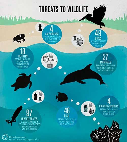 plasticos y especies afectadas