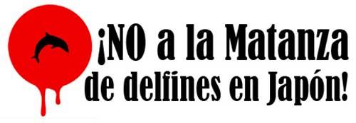 cartel no matanza delfines02