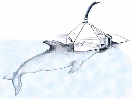 delfin investigado