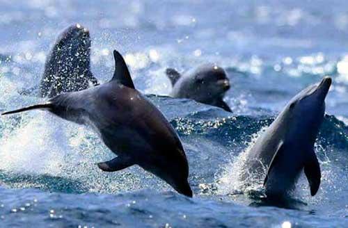 delfines establecen horarios 03
